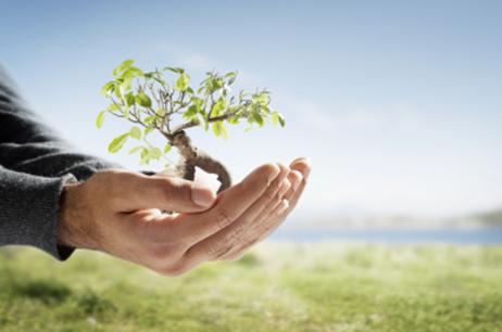Diapo arbre dans les mains